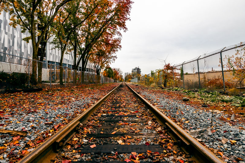 Remnants of fall foliage on tracks in Kendall